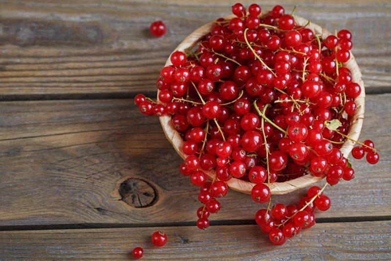 Рецепты из красной смородины фото