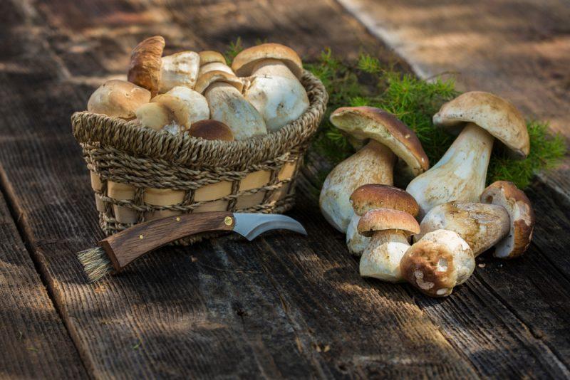 белые грибы рецепты приготовления