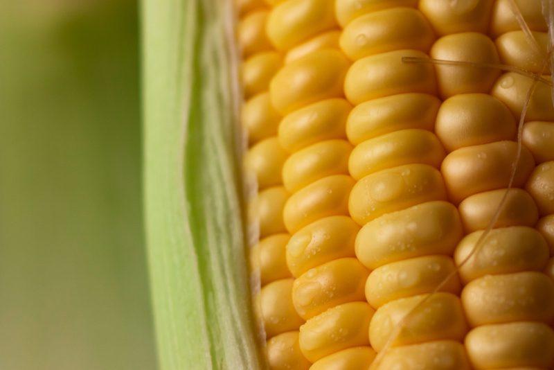 Как варить кукурузу: советы от шефа